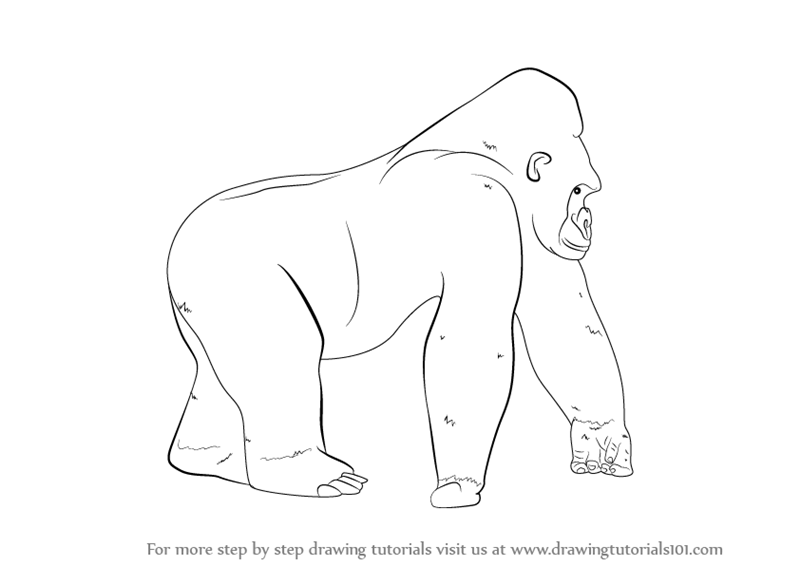 how to draw a silverback gorilla how to draw a gorilla step by step pictures cool2bkids a how gorilla draw to silverback