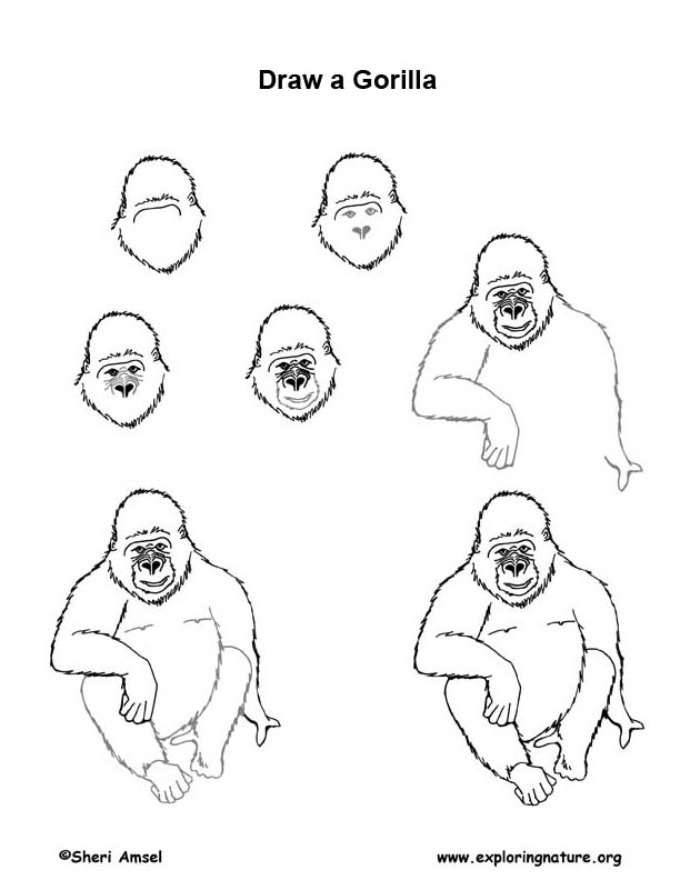 how to draw a silverback gorilla how to draw a silverback gorilla step by step drawing to how silverback gorilla a draw