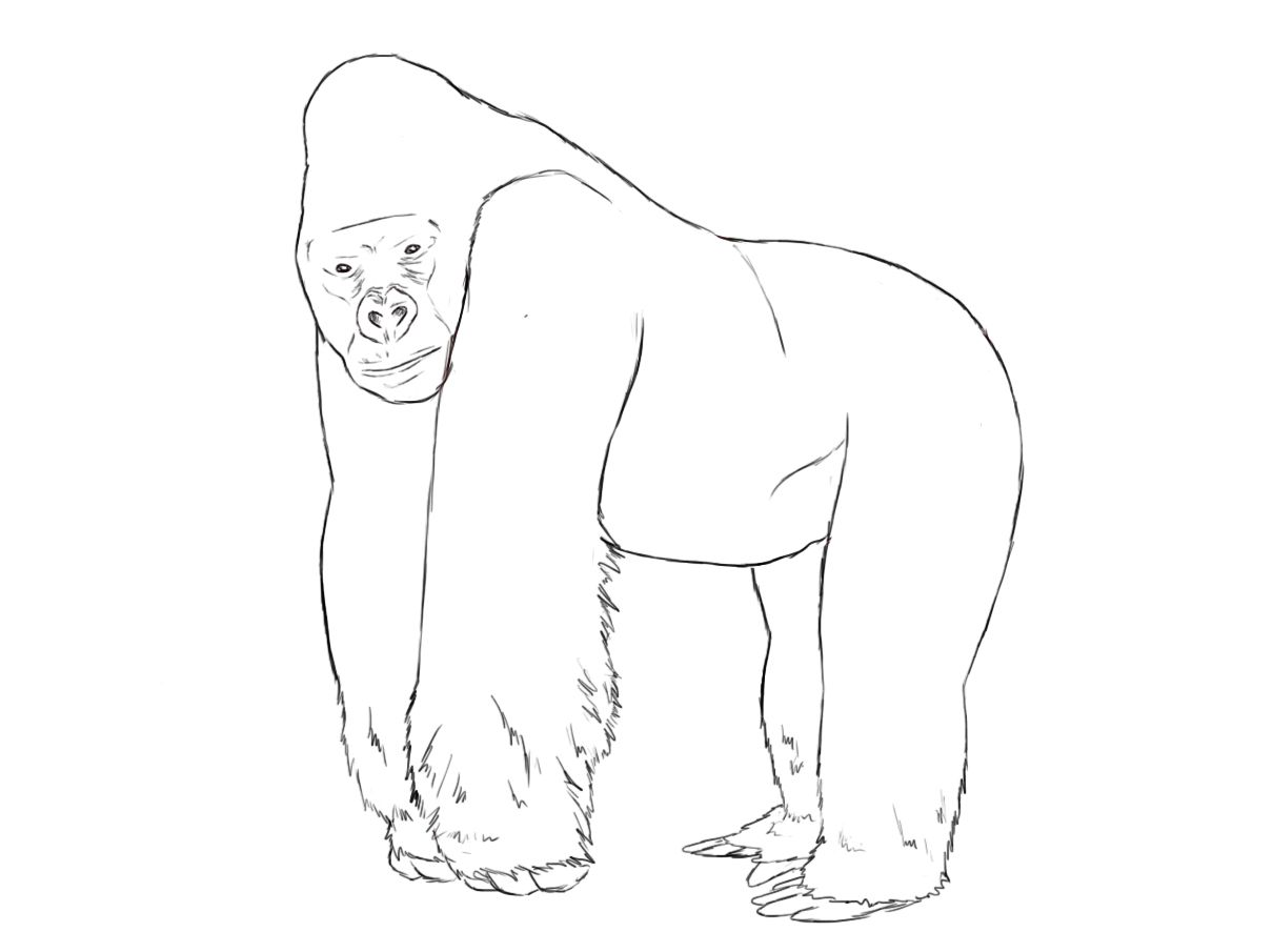 how to draw a silverback gorilla learn how to draw a gorilla wild animals step by step draw gorilla silverback how a to