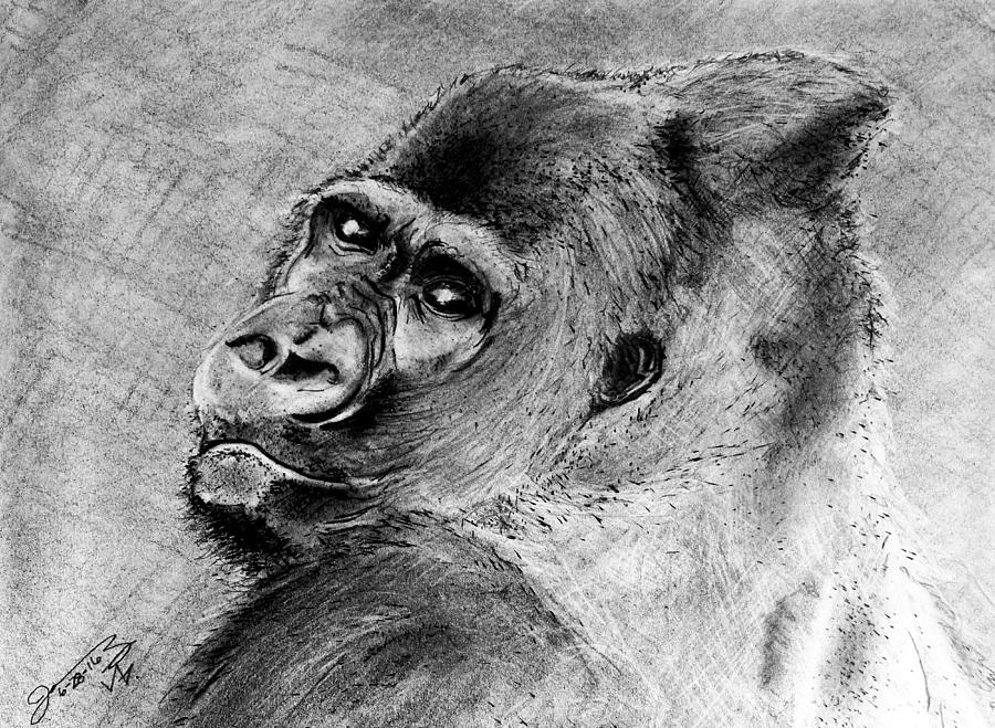 how to draw a silverback gorilla silverback gorilla drawing at getdrawings free download to how silverback a draw gorilla