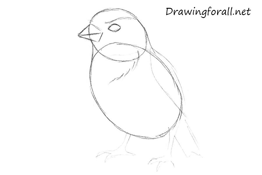 how to draw a sparrow step by step draw sparrows step by step drawing sheets added by step sparrow how step to draw by a