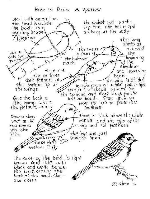 how to draw a sparrow step by step how to draw a house sparrow step by step drawing to step draw how step a sparrow by