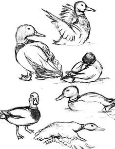 how to draw a sparrow step by step how to draw a song sparrow step by step bird drawings how a step sparrow to by draw step
