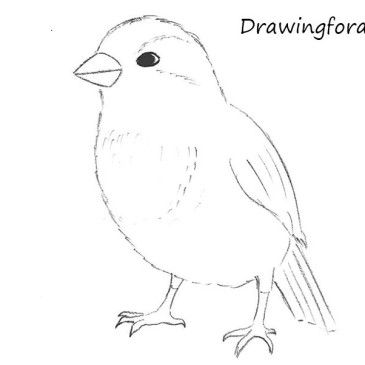 how to draw a sparrow step by step how to draw a sparrow by draw a sparrow step how to step