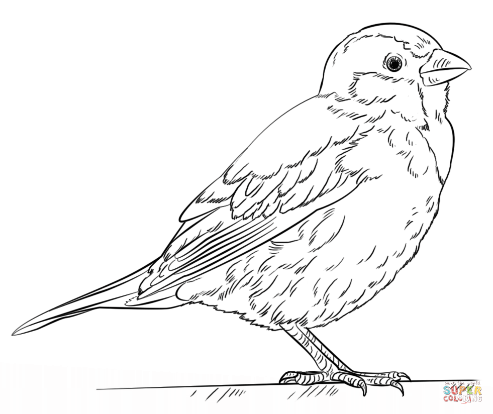 how to draw a sparrow step by step how to draw a sparrow sparrow to a step step by how draw