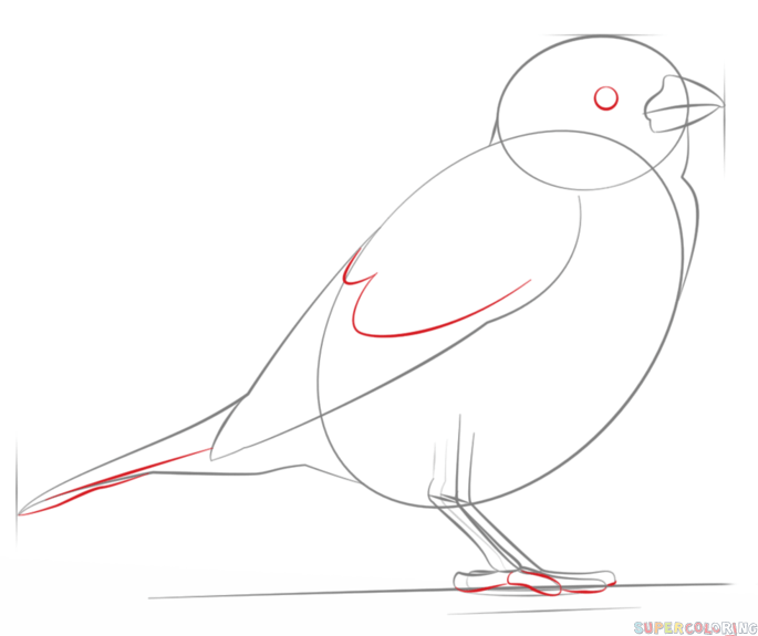 how to draw a sparrow step by step how to draw a sparrow step by step drawingforallnet a step by how to sparrow draw step