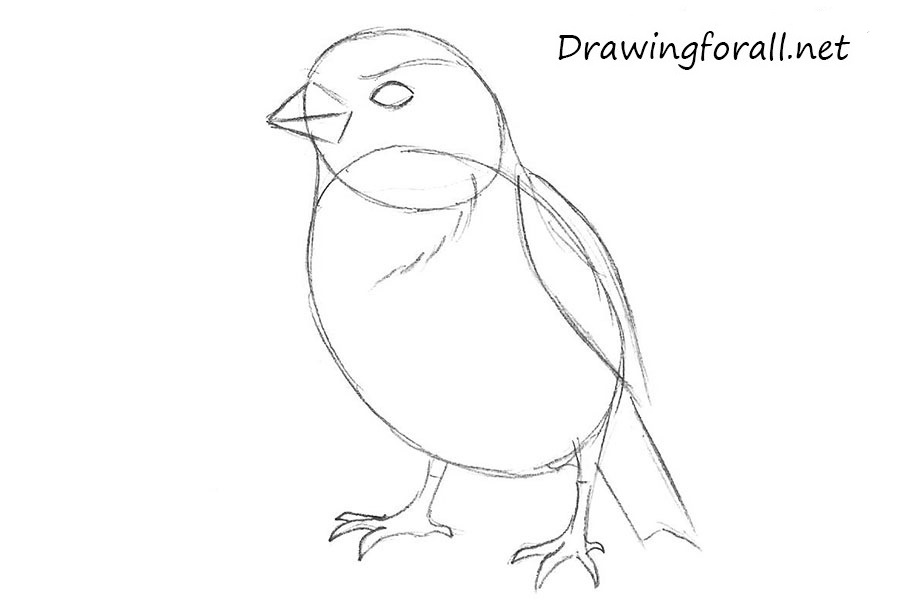 how to draw a sparrow step by step how to draw a sparrow step by step drawingforallnet to draw a how step step sparrow by