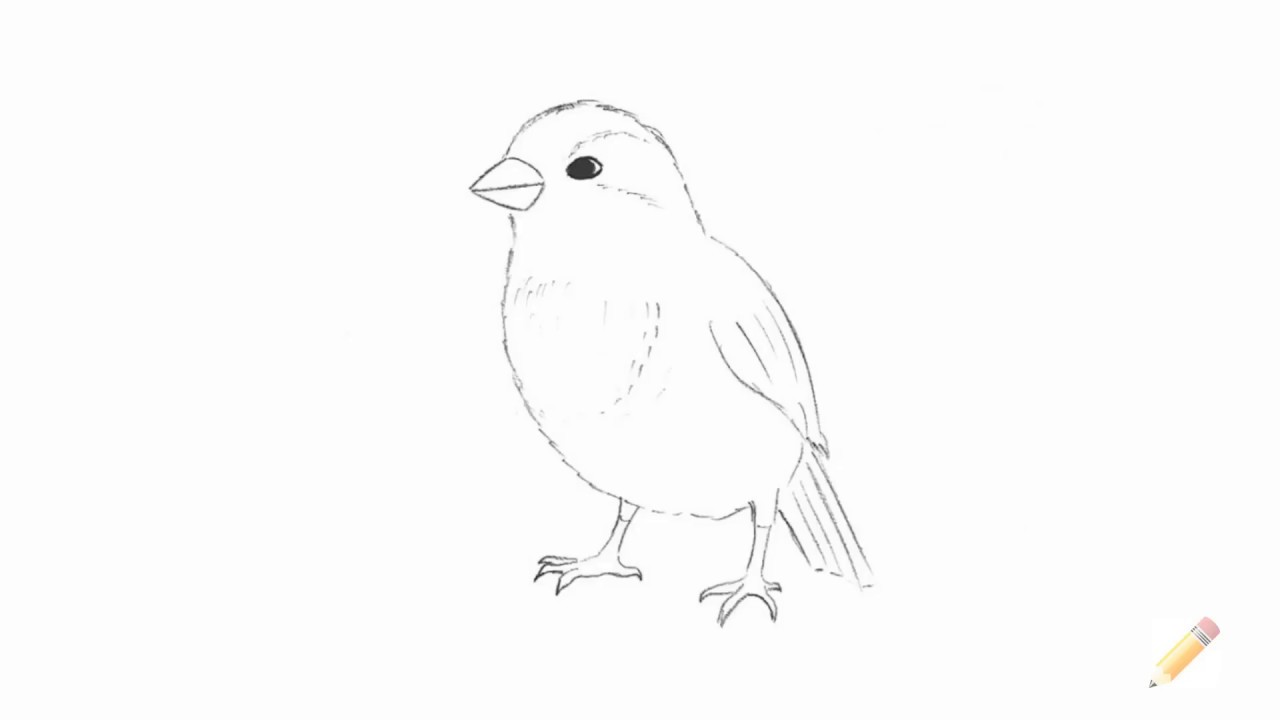 how to draw a sparrow step by step royalty free how to draw a sparrow flying hd wallpaper by draw how sparrow to a step step