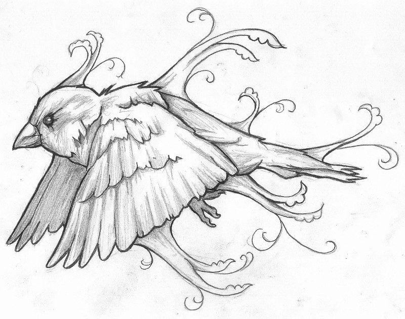 how to draw a sparrow step by step simple sparrow drawing at getdrawings free download step step to a by sparrow how draw