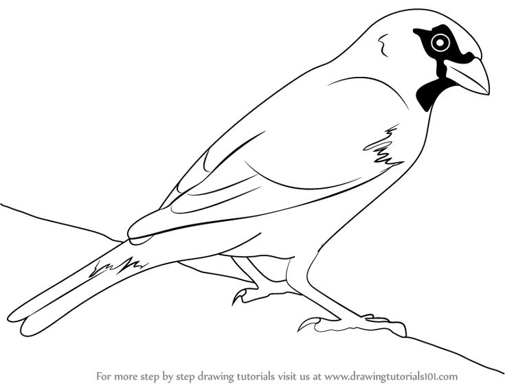 how to draw a sparrow step by step sparrow bird drawing at getdrawings free download step draw by sparrow how a step to