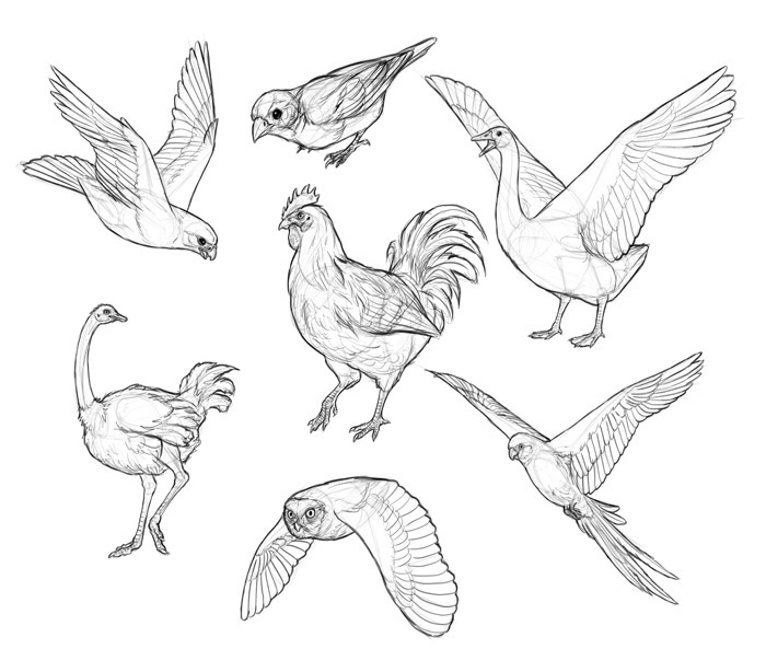 how to draw a sparrow step by step sparrow flying drawing at getdrawingscom free for a to step draw by how step sparrow