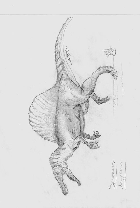 how to draw a spinosaurus spinosaurus drawing by greenflyte on deviantart to how spinosaurus draw a