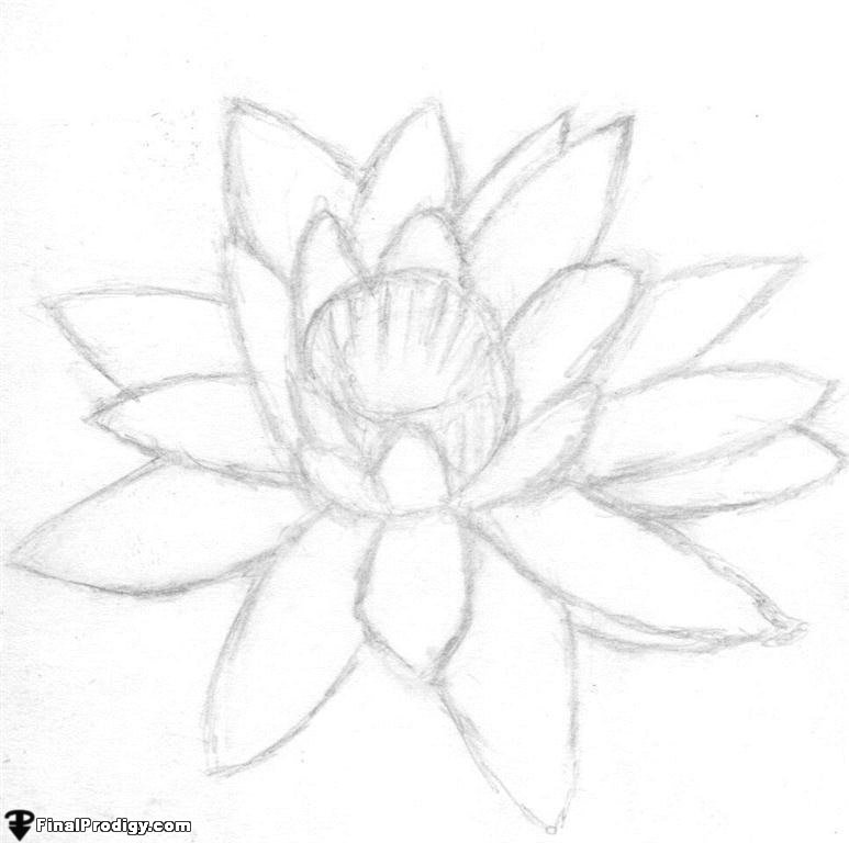 how to draw a water lily how to draw a realistic lily flower step by best flower site a how to lily water draw