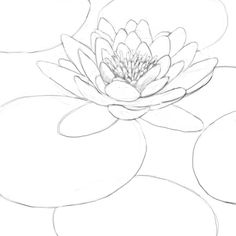 how to draw a water lily how to draw a water lily and pad step by step drawing how to water a draw lily
