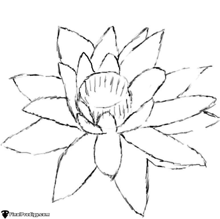 how to draw a water lily how to draw a water lily finalprodigycom a lily draw water to how