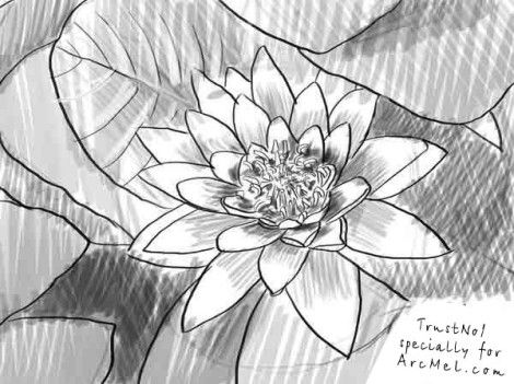 how to draw a water lily how to draw a water lily step 5 drawings flower drawing water a lily how draw to