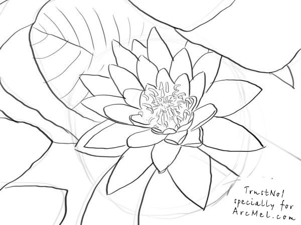 how to draw a water lily how to draw a water lily step by step arcmelcom how lily draw a to water