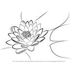 how to draw a water lily learn how to draw a water lily lily step by step to a draw lily water how