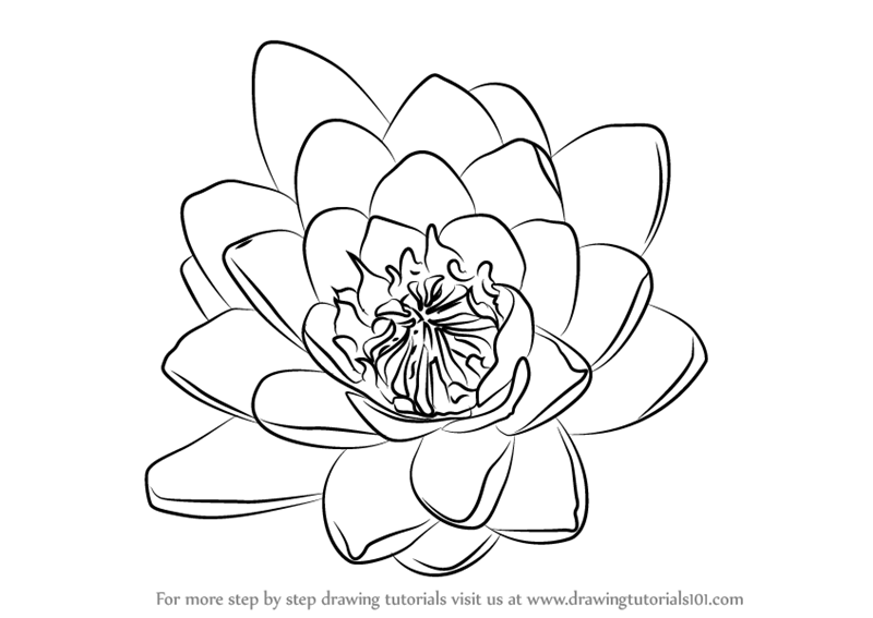 how to draw a water lily learn how to draw water lily flower lily step by step water how to lily draw a
