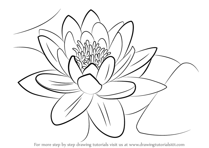 how to draw a water lily step by step how to draw a water lily a draw lily water to how