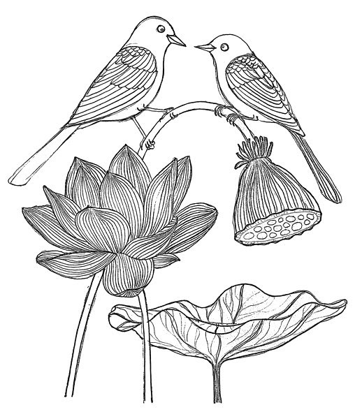 how to draw a water lily water lily drawing draw to a how water lily