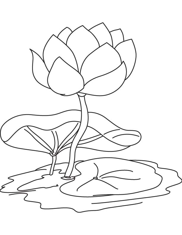 how to draw a water lily water lily flower drawing at getdrawings free download a draw to water how lily