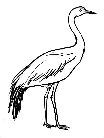 how to draw crane bird learn how to draw a crane birds step by step drawing crane how bird to draw