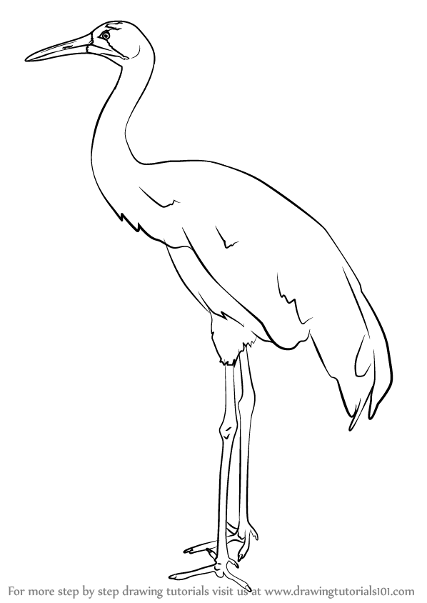 how to draw crane bird learn how to draw a crowned crane birds step by step crane bird to how draw
