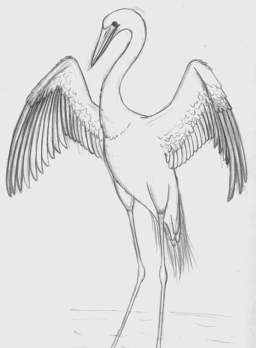 how to draw crane bird learn how to draw a grey crowned crane birds step by crane draw how to bird