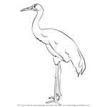 how to draw crane bird learn how to draw a kingfisher birds step by step how draw crane bird to
