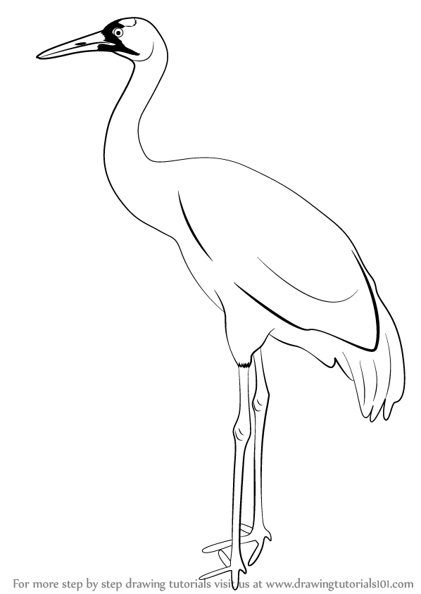 how to draw crane bird learn how to draw a sandhill crane birds step by step draw how to bird crane