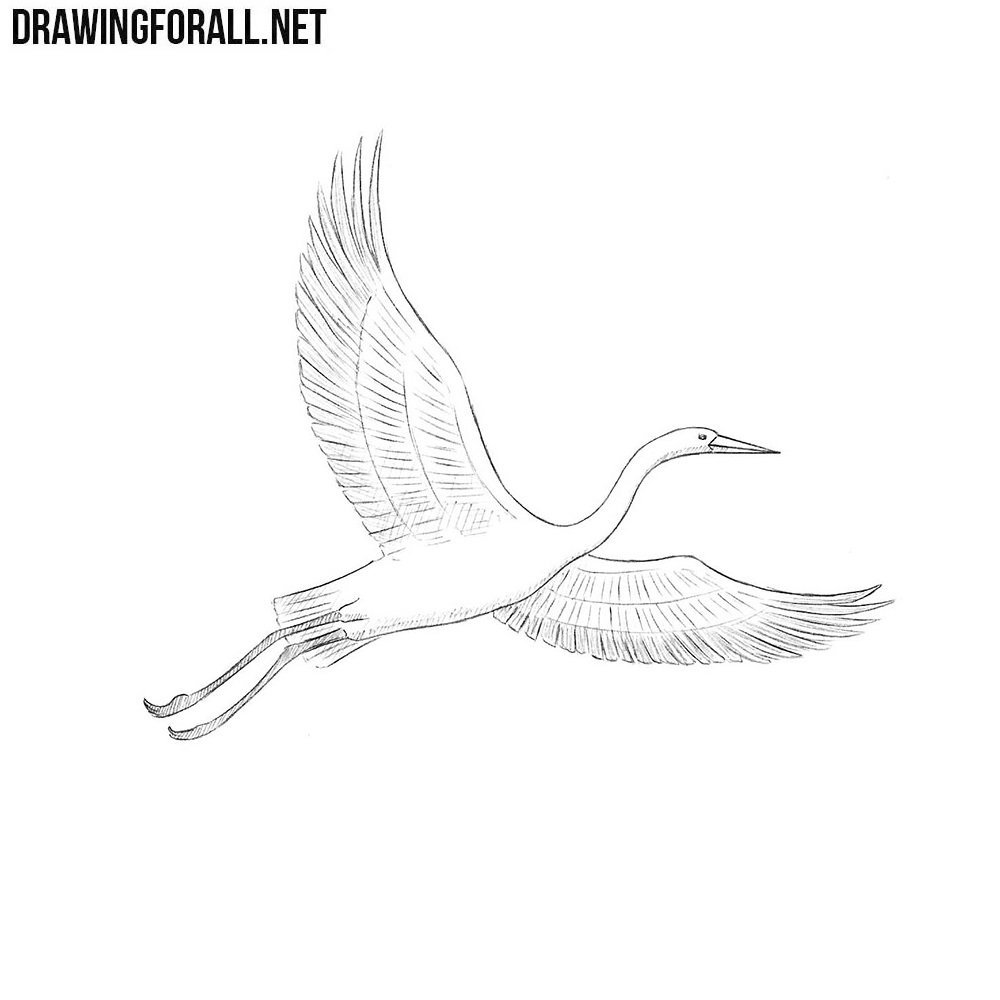 how to draw crane bird learn how to draw a whooping crane birds step by step to bird crane how draw