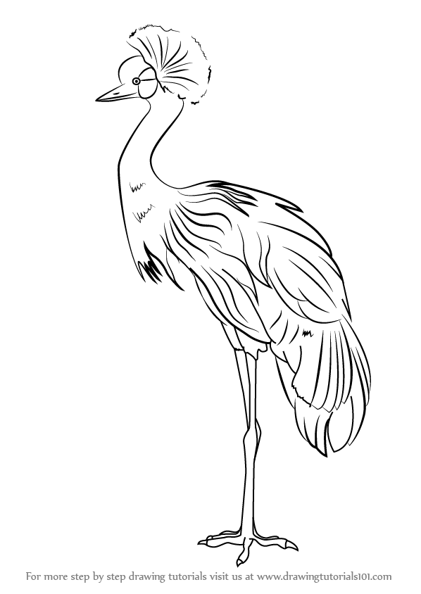 how to draw crane bird step by step how to draw a black crowned crane to draw bird crane how
