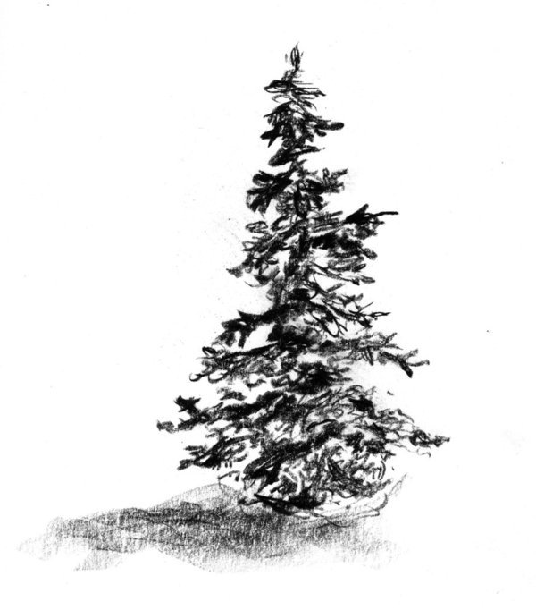 how to draw realistic pine trees 32a2 squirkle a realistic spruce tree drawspace realistic pine draw trees how to