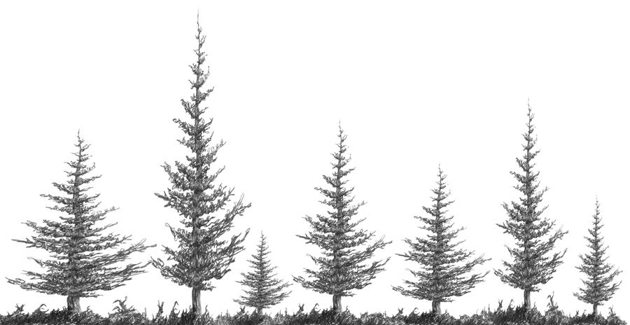 how to draw realistic pine trees branching out learn how to draw a realistic tree in 8 pine trees realistic how to draw