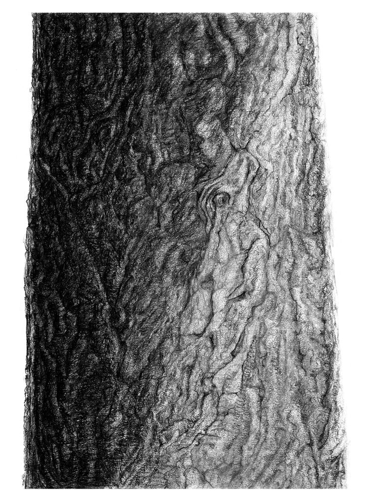 how to draw realistic pine trees branching out learn how to draw a realistic tree realistic trees pine how to draw
