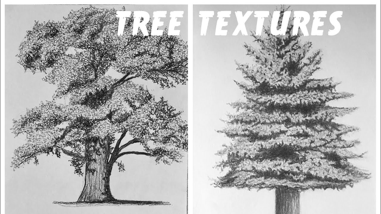 how to draw realistic pine trees how to draw a pine tree branch to pine trees draw realistic how