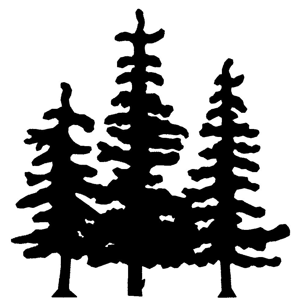 how to draw realistic pine trees how to draw realistic trees google search types of pine to trees how realistic draw