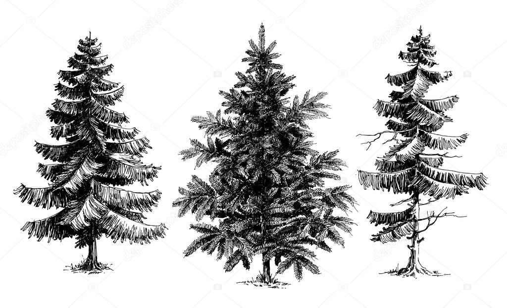 how to draw realistic pine trees line drawing pine tree google search in 2020 pine tree realistic how pine draw trees to