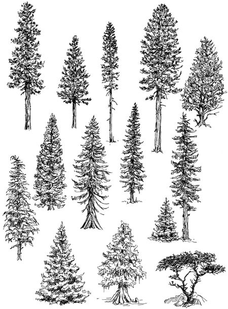 how to draw realistic pine trees pin by nancy workman on birthdays tree drawings pencil how to draw trees pine realistic
