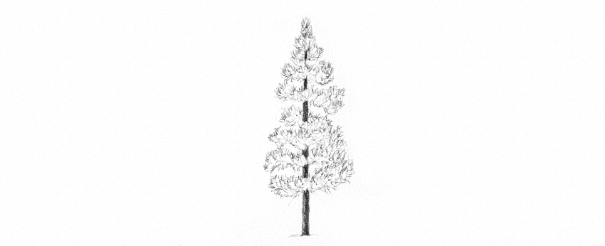 how to draw realistic pine trees pine tree drawing tutorial at getdrawingscom free for to realistic trees draw pine how