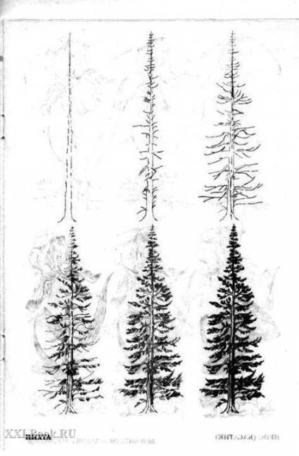 how to draw realistic pine trees pine trees christmas trees realistic hand drawn vector set trees to draw pine how realistic