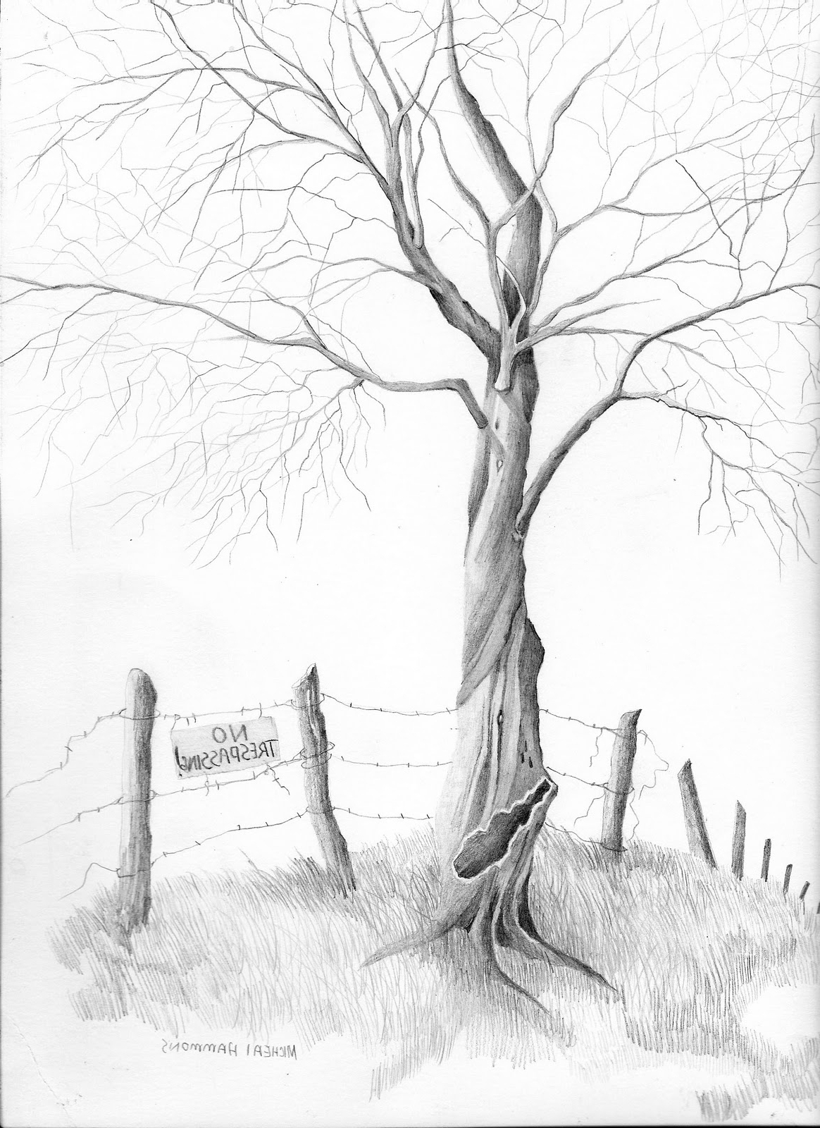 how to draw realistic pine trees pine trees drawing at getdrawings free download realistic how pine to trees draw