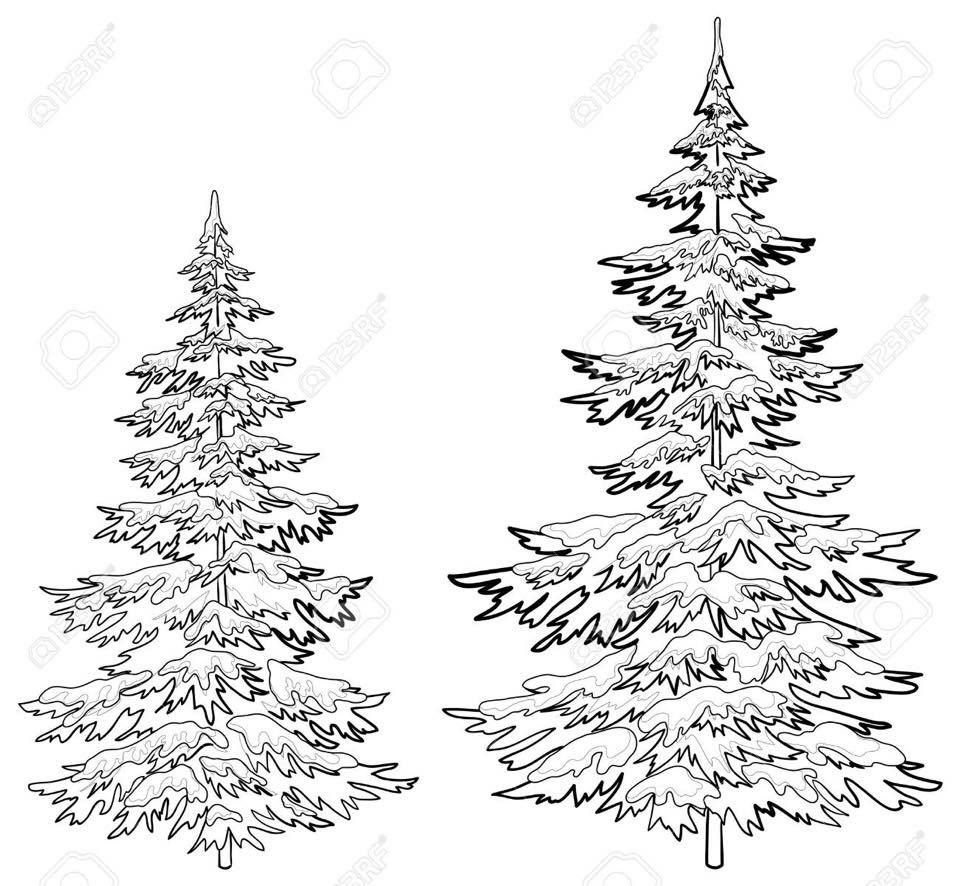 how to draw realistic pine trees realistic drawing image result for realistic pine tree trees realistic draw how pine to