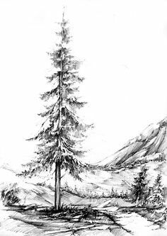 how to draw realistic pine trees realistic pencil pine tree christmas tree drawing to draw realistic how pine trees