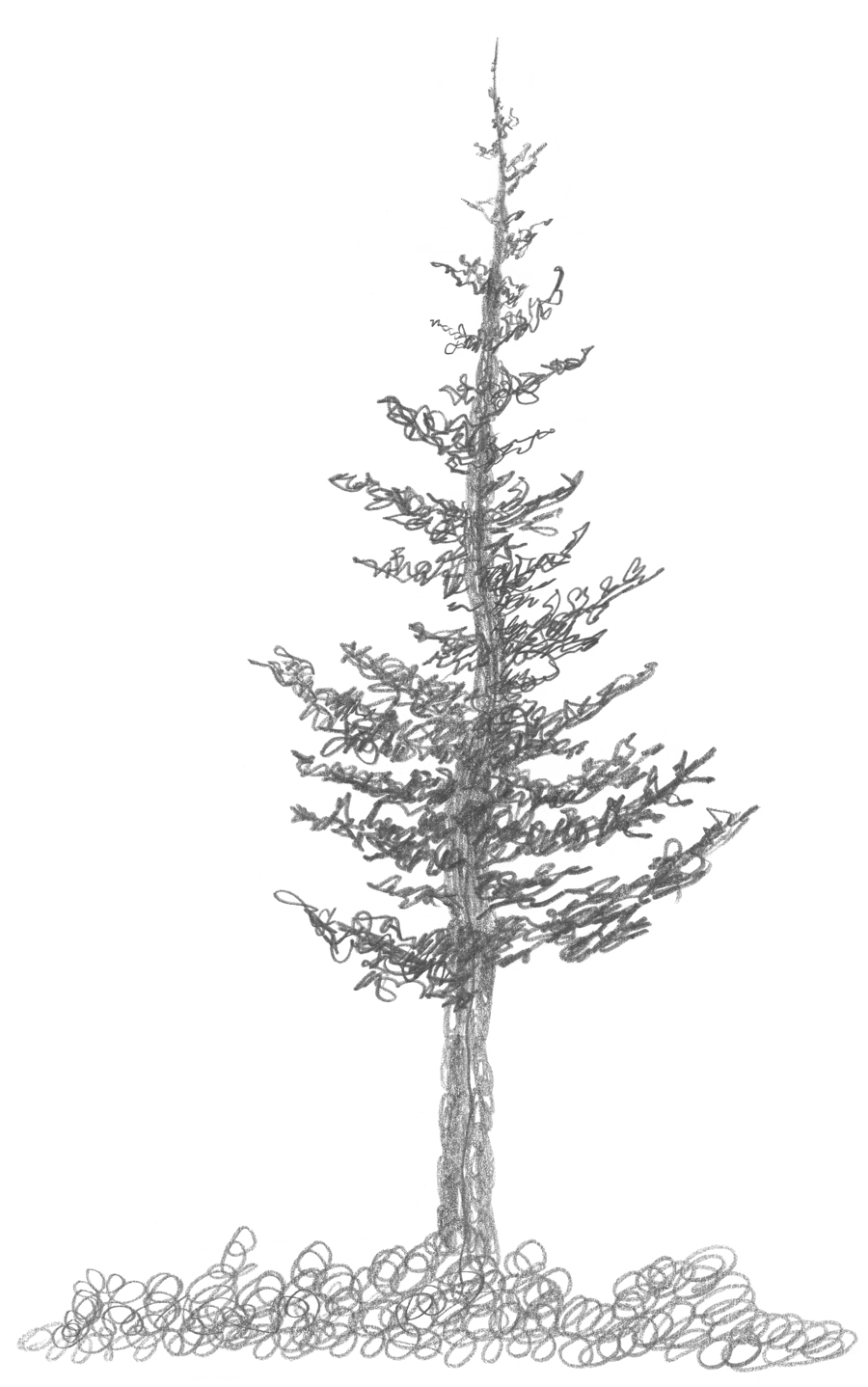 how to draw realistic pine trees realistic pine tree drawing easy to realistic trees draw how pine