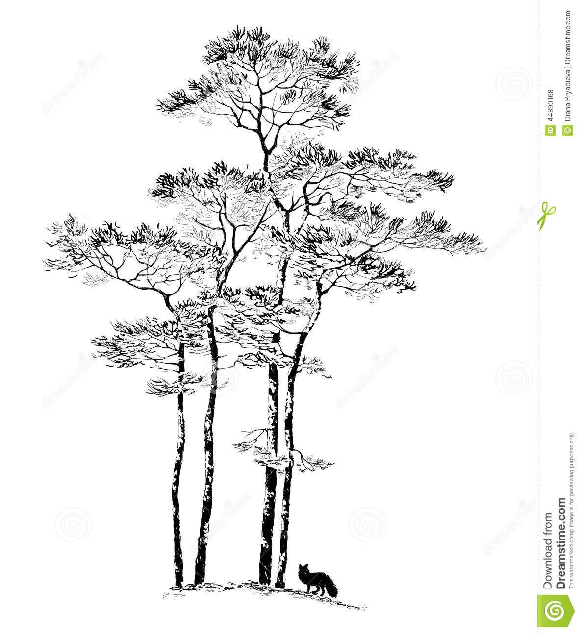 how to draw realistic pine trees tree sketch simple at paintingvalleycom explore pine trees to how draw realistic