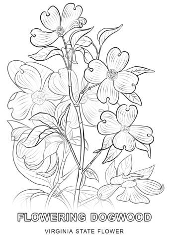 how to draw tennessee state flower camellia line drawing floral embroidery patterns tennessee draw to how state flower