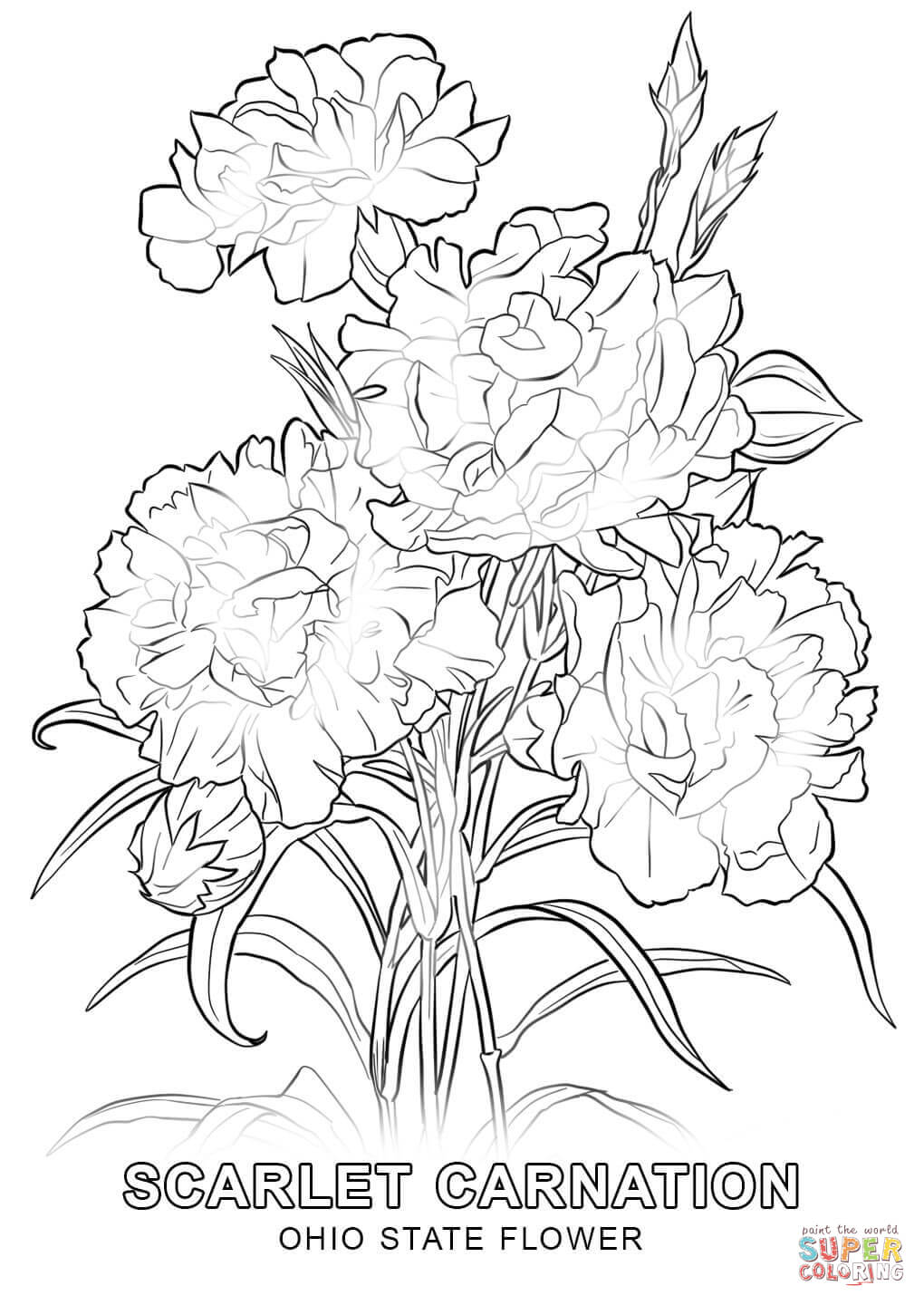 how to draw tennessee state flower hawaii state flower drawing at getdrawingscom free for to state draw flower how tennessee
