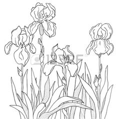 how to draw tennessee state flower kentucky drawing at getdrawings free download draw tennessee how flower state to
